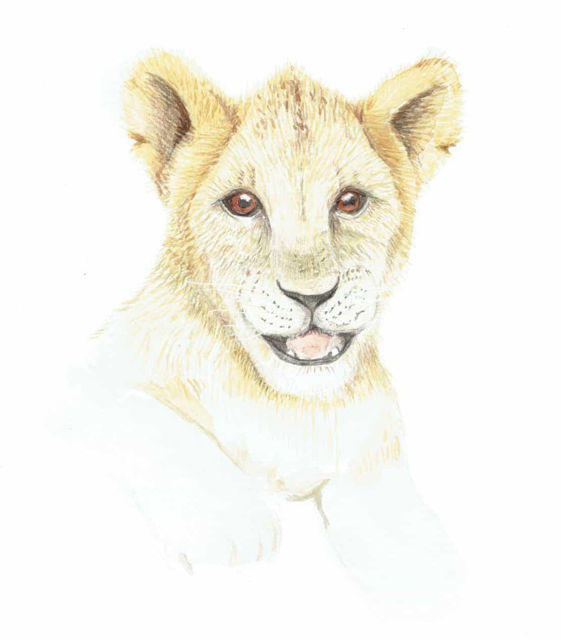 Illustratie leeuw