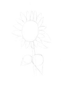 Hoe teken je bloemen?