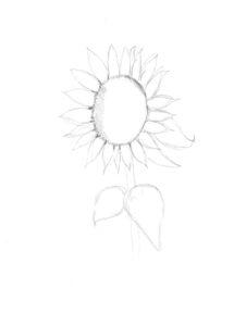 stap 2 zonnebloem tekenen