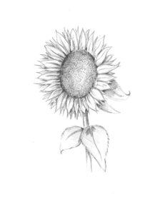 hoe teken je bloemen